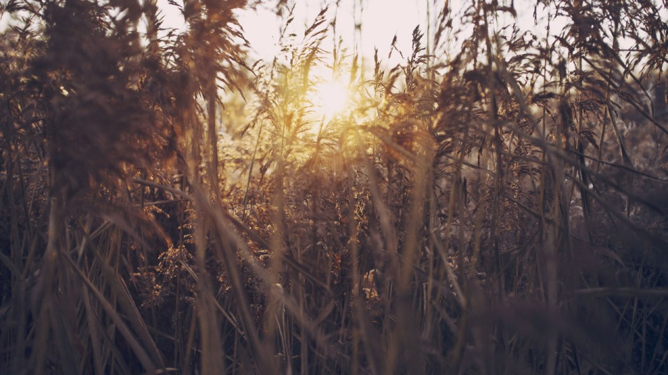 Organizational Consultation: An Appreciative Approach–I. What's in the Straw?
