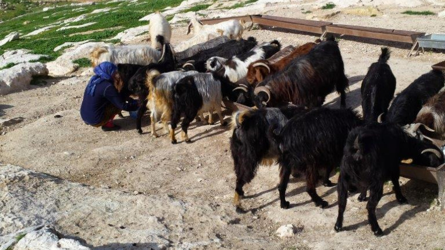 My Friend is a Palestinian Bedouin: VII. Cultural Differences–Honor and Aggression