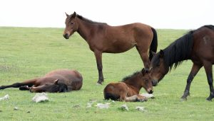 A family of horses grazing.